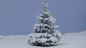 Hugg ditt eget juletre @ Skui gård